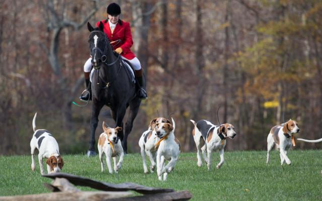 Horses & Hounds