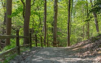 Guests are welcome to hike the Forest Trail to learn about the nature at Mount Vernon.